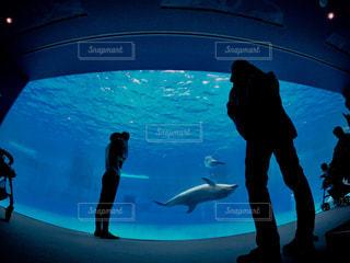 イルカと私の背中📸の写真・画像素材[2615136]