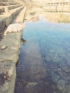 川に移るネコの写真・画像素材[2996291]
