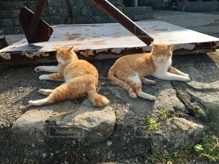 歩道に横たわる猫の写真・画像素材[2996292]