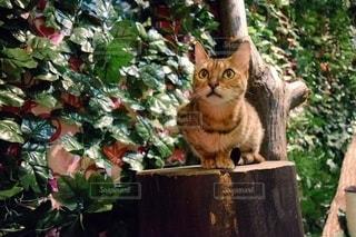 庭に座っている猫の写真・画像素材[2996290]