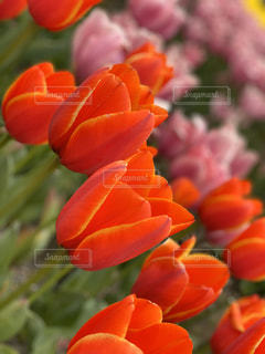 花のクローズアップの写真・画像素材[3042236]