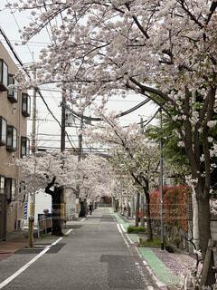 生活の中の桜の写真・画像素材[4303244]
