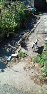 猫の写真・画像素材[2622244]