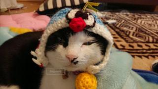 猫,動物,屋内,かわいい,帽子,昼寝,ペット,寝る,人物,自作,ドラえもん,ネコ,はちわれ,無言
