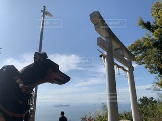 水の中に立っている犬の写真・画像素材[2712678]