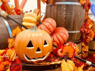 秋のオバケかぼちゃの写真・画像素材[2600334]