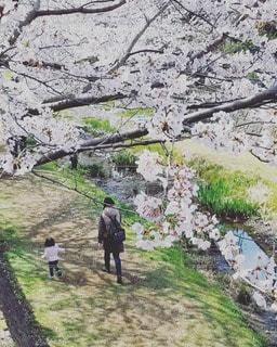 桜散歩のひとときの写真・画像素材[2587389]