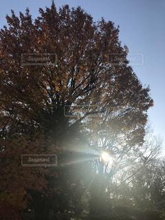 自然,空,秋,屋外,太陽,木漏れ日,光,樹木,Sky,草木,そら