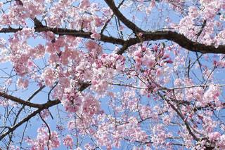 花柄みたいの写真・画像素材[3068514]