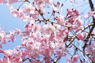 晴天に咲くの写真・画像素材[3068515]
