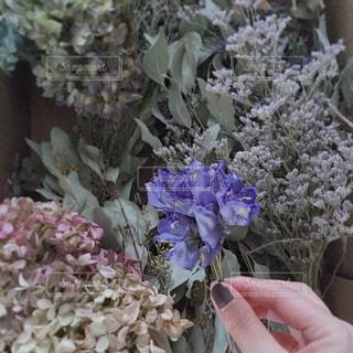 花ひとつまみの写真・画像素材[3093554]
