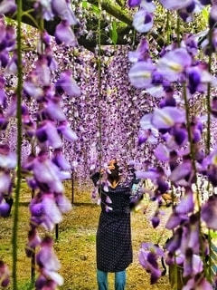 flowers shawerの写真・画像素材[2614563]