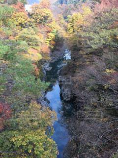 渓谷の紅葉の写真・画像素材[2595466]