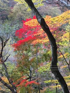 自然の写真・画像素材[2617514]