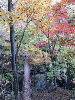 橋と紅葉の写真・画像素材[2618244]