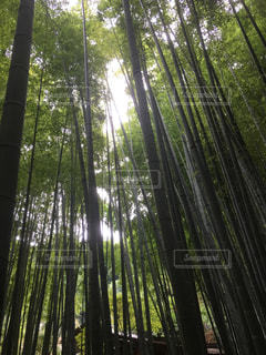 竹林から覗く光の写真・画像素材[2626520]