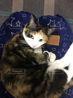 ベッドの上に座っている猫の写真・画像素材[2703295]