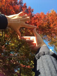 森の前でリンゴを握る手の写真・画像素材[2726681]
