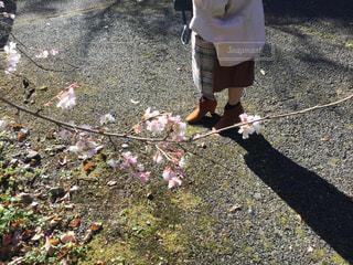 冬桜とブーツの写真・画像素材[2726732]
