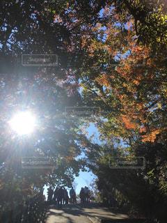 自然,空,秋,屋外,太陽,葉,日光,山,光,登山,観光,樹木,日中