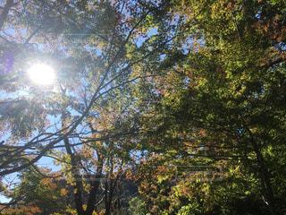 空,秋,屋外,太陽,葉,光,樹木,草木,太陽の光