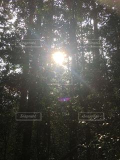 自然,空,屋外,太陽,森,日光,光,木々,樹木,樹々