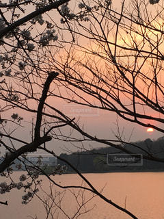 自然,空,夕日,桜,屋外,湖,太陽,夕方,光,樹木,黄昏,ダム,沈む太陽