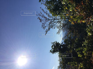 自然,空,屋外,太陽,日光,光,樹木,草木