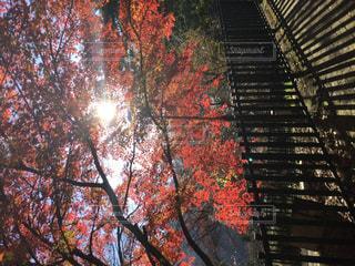 空,秋,屋外,太陽,葉,光,樹木,草木,カエデ