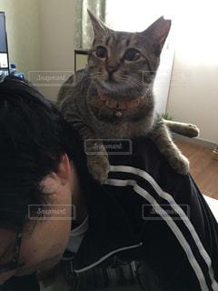 男性,1人,猫,動物,屋内,ペット,人物,人,ネコ,乗る,中年男性,肩乗り