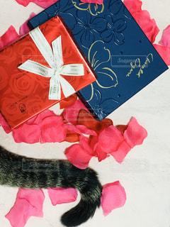 赤い表面に横たわる猫の写真・画像素材[2963462]