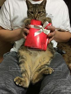 猫を抱いている男の写真・画像素材[2964117]