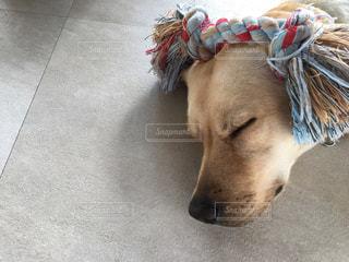 帽子をかぶった犬の写真・画像素材[2983105]