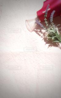 花のクローズアップの写真・画像素材[2985560]