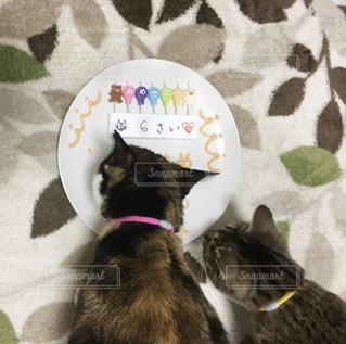 皿の上に座っている猫の写真・画像素材[2995835]
