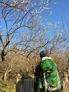 木の隣に立っている男の写真・画像素材[3016438]