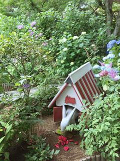 庭の赤い花の写真・画像素材[3029691]
