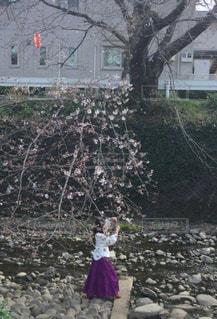 女性,1人,花,桜,木,屋外,枝,川,撮影,小川,サクラ,木々,樹木,人物,写真,歩道,地面,石,樹,幹,草木,ガードレール,さくら,撮る