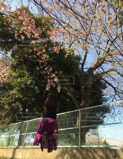 女性,1人,風景,空,公園,花,桜,屋外,青空,ジャンプ,バンザイ,飛ぶ,サクラ,樹木,人物,人,フェンス,草木,体,日中,伸びる,さくら,万歳,跳ねる