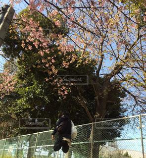 男性,1人,風景,空,花,桜,屋外,ジャンプ,飛ぶ,景色,サクラ,樹木,人物,人,フェンス,伸びる,さくら,跳ねる