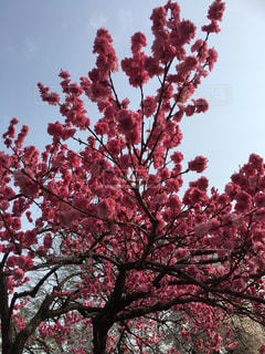 木の中の赤い花の写真・画像素材[3050183]