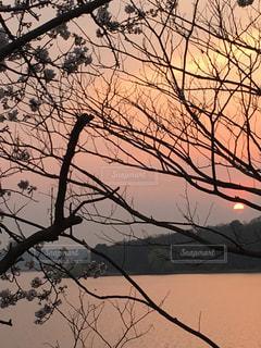自然,風景,空,夕日,桜,屋外,太陽,静か,夕焼け,枝,夕方,景色,サクラ,背景,樹木,夕陽,ダム,オレンジ色,沈む,草木,日中,黄昏時,さくら,フォトジェニック,落ちる,貯水池,インスタ映え