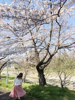 女性,1人,自然,空,公園,花,桜,ロングヘア,屋外,ピンク,かわいい,晴れ,青空,後ろ姿,影,女,サクラ,草,樹木,スカート,可愛い,桜色,ふんわり,雰囲気,ピンク色,女の人,草木,日中,さくら,フォトジェニック,ロングスカート,さくら色,サクラ色,インスタ映え
