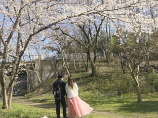 女性,男性,家族,恋人,2人,自然,風景,空,公園,春,桜,ロングヘア,カップル,芝生,屋外,ピンク,白,かわいい,晴れ,晴天,後ろ姿,歩く,散歩,桜並木,景色,サクラ,草,仲良し,背景,白い,樹木,スカート,人物,背中,人,夫婦,ヒラヒラ,可愛い,広告,シャツ,記念日,桜色,男女,芝,ふんわり,ゆらゆら,雰囲気,お気に入り,ピンク色,並ぶ,ブラウス,広がる,日中,さくら,揺れる,フォトジェニック,寄り添う,くっつく,ひらひら,寄り添って,ロングスカート,チラシ,ブログ,ユラユラ,絵になる,さくら色,サクラ色,インスタ映え,親密,記念日写真,blog