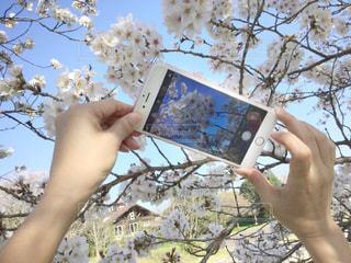 女性,1人,自然,空,花,桜,屋外,ピンク,かわいい,晴れ,青空,晴天,手,花見,スマホ,鮮やか,サクラ,指,樹木,人物,人,可愛い,スマートフォン,ポーズ,明るい,携帯,素敵,ピンク色,指先,携帯電話,さくら,撮る,フォトジェニック,両手,持つ,インスタ映え