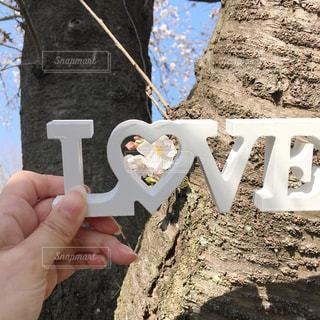 女性,1人,自然,風景,空,春,桜,LOVE,木,屋外,白,かわいい,枝,手,景色,サクラ,木々,背景,指,手持ち,ハート,人,可愛い,広告,ラブ,樹,指先,手元,さくら,物,持つ,プーレト,樹樹