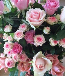ピンクの花束の写真・画像素材[3084120]