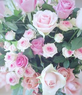 ピンクの花束の写真・画像素材[3084137]