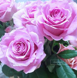 花のクローズアップの写真・画像素材[3097706]