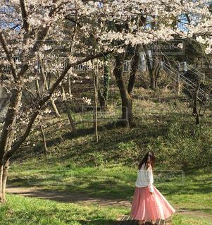 木の隣に立っている少女の写真・画像素材[3104153]